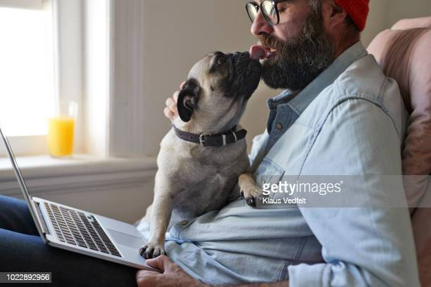 man sitting with laptop together with puck dog - funny dogs stock pictures, royalty-free photos & images