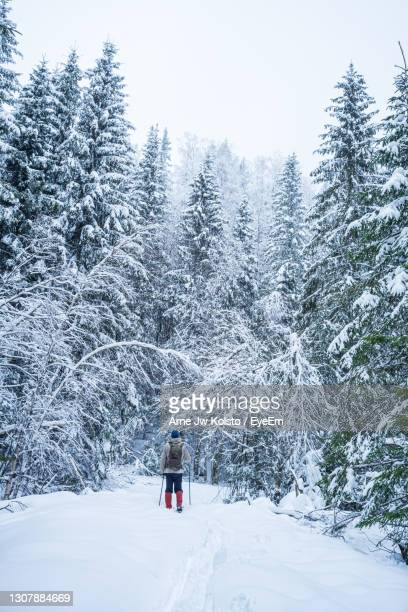 man skiing between tall snow covered pines in a nordic forest - arne jw kolstø stock pictures, royalty-free photos & images