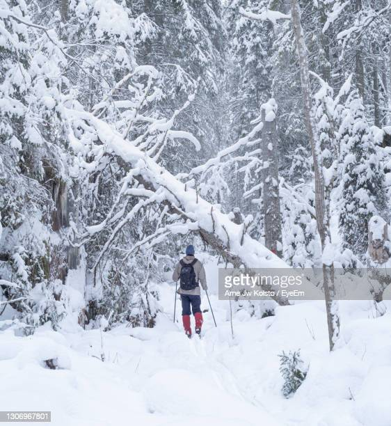 man skiing in a wilderness forest - arne jw kolstø stock pictures, royalty-free photos & images