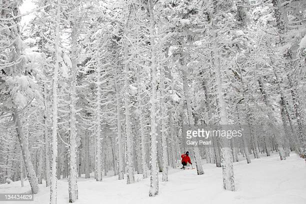 Man skiing through forest