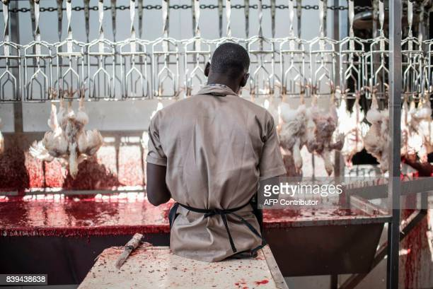 A man slaughtering chickens sits on a bench in the Valentine Chicken Abattoir on July 11 2017 Farming in Nigeria is not for the fainthearted...