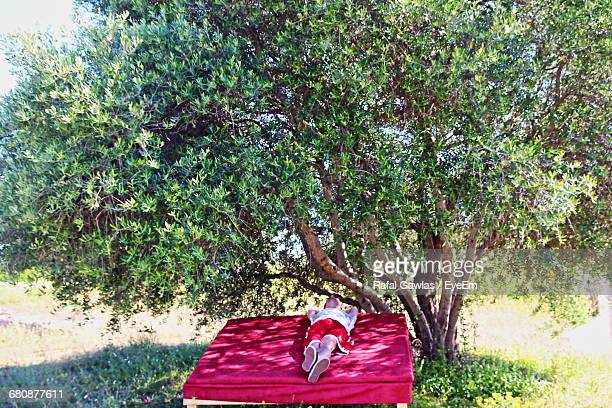Man Sleeping On Red Bed By Tree