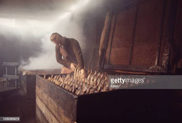 A man smoks a cigarette whilst he hangs haddock by the tail over woodchip fires for the smoking process in Abroath where 'Arbroath Smokies' are a...