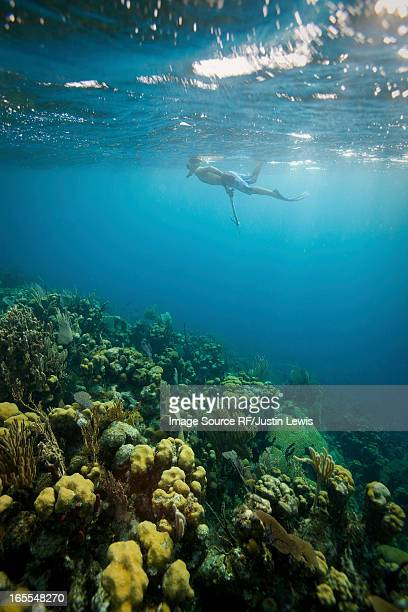 man snorkeling on tropical coral reef - spear stock photos and pictures