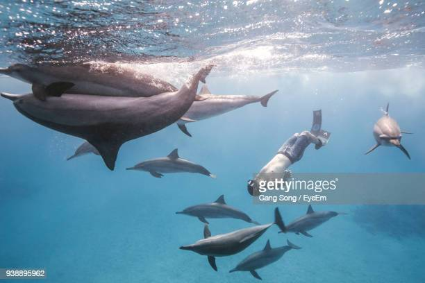 man snorkeling with fishes underwater - dolphin stock pictures, royalty-free photos & images