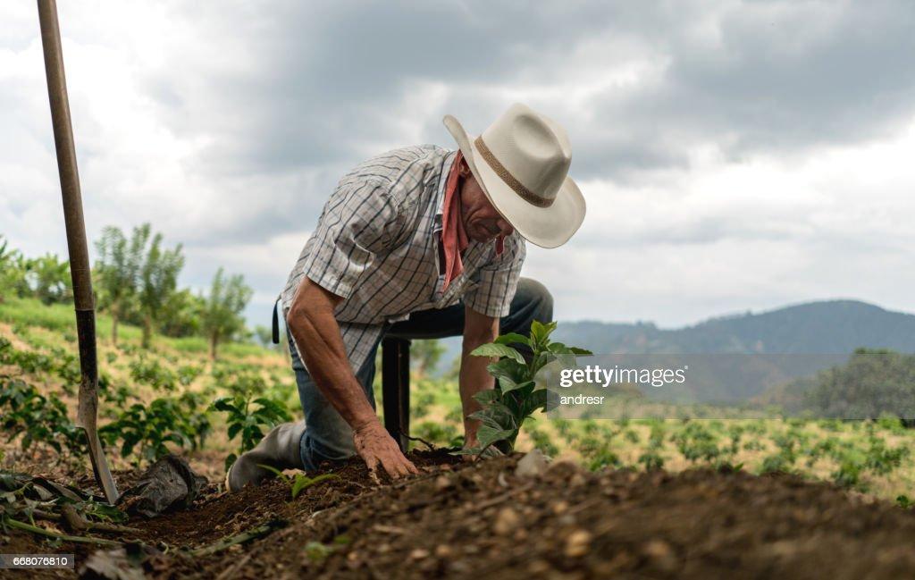 Hombre siembra la tierra en una granja : Foto de stock