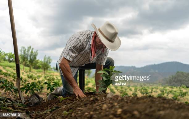 Man sowing the land at a farm