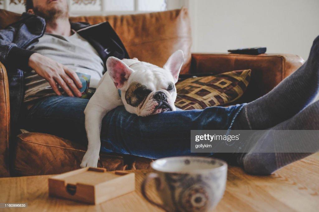 Man besteden een luie middag met zijn hond, een Franse Bulldog : Stockfoto