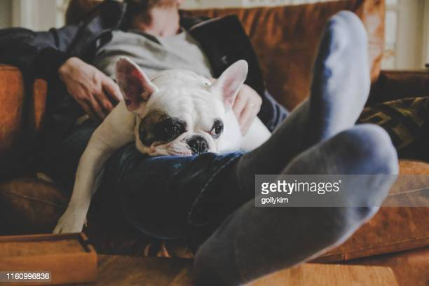 man spending a lazy afternoon with his dog, a french bulldog - cosy stock pictures, royalty-free photos & images