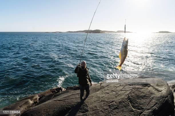 man spinning fishing in the sea with a rod, catch a pollock - hordaland county stock pictures, royalty-free photos & images