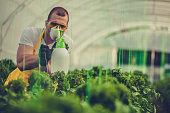farmer spraying plants greenhouse