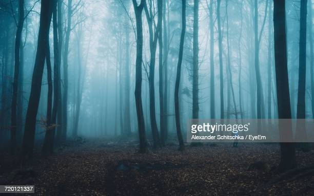 Man Standing Amidst Trees In Forest During Foggy Weather
