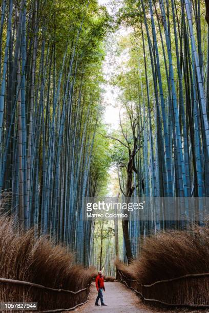 man standing at bamboo forest, kyoto, japan - arashiyama stock pictures, royalty-free photos & images