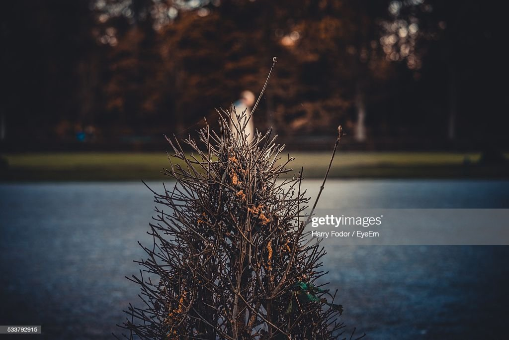 Man Standing By River In Park : Foto stock
