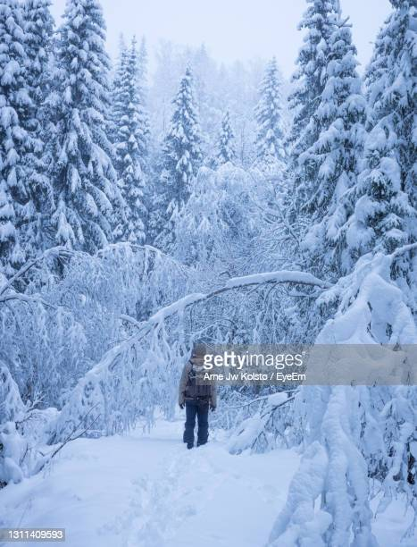 man standing in a snow covered forest - arne jw kolstø stock pictures, royalty-free photos & images
