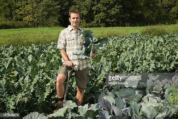 man standing in cabbage field - esher stock pictures, royalty-free photos & images
