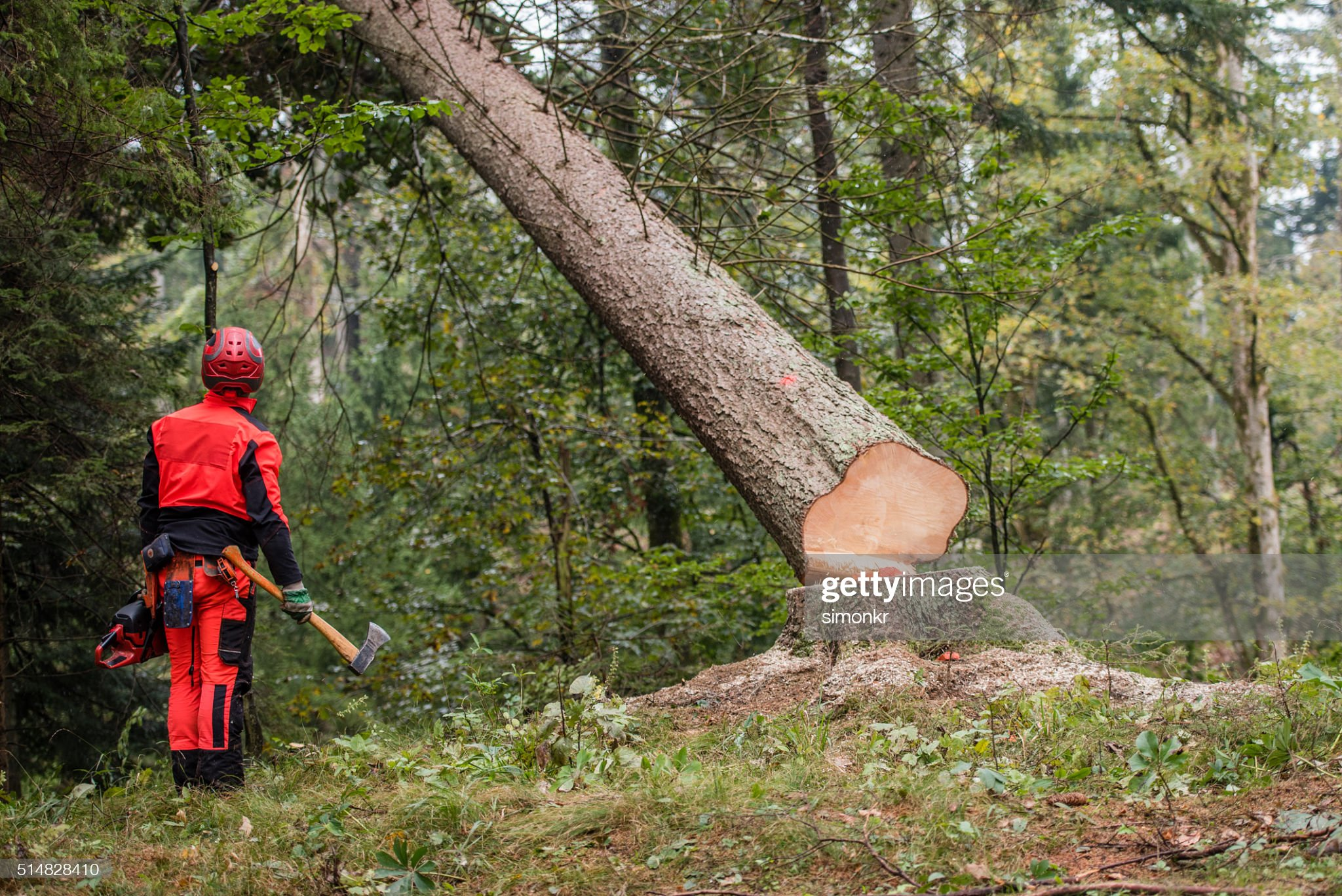 Man standing in forest : Stock Photo