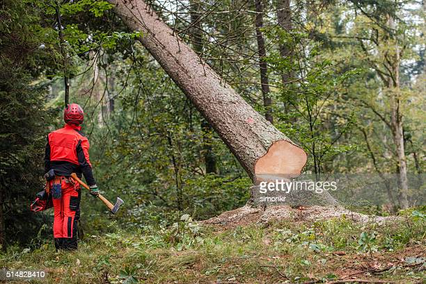 man standing in forest - deforestation stock pictures, royalty-free photos & images