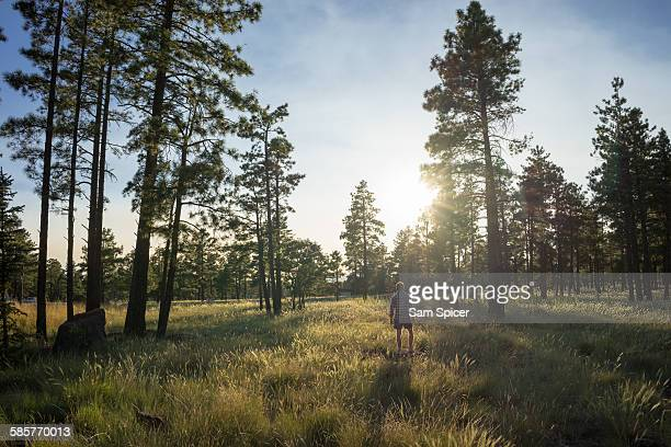Man standing in forest sunset
