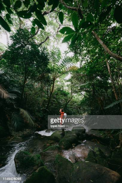 man standing inside jungle with river, iriomote island, okinawa, japan - satoyama scenery stock pictures, royalty-free photos & images