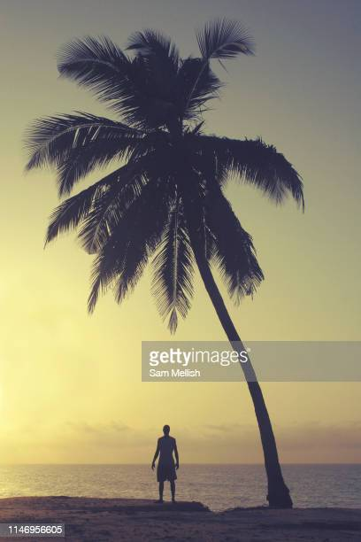 A man standing next to a tall palm tree silhouetted by the setting sun on the 27th October 2006 at Old Ningo Beach in Ghana Old Ningo is a town in...