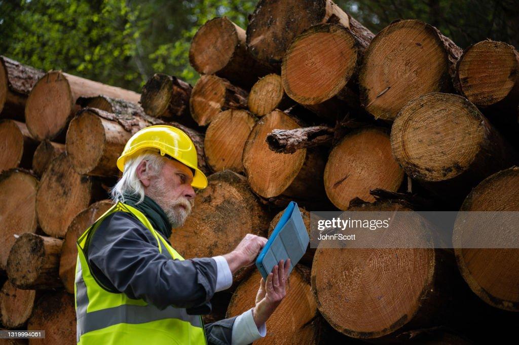 Man standing next to timber stacks : Stock Photo