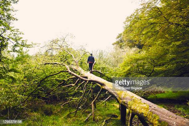 man standing on a fallen tree - plant part stock pictures, royalty-free photos & images