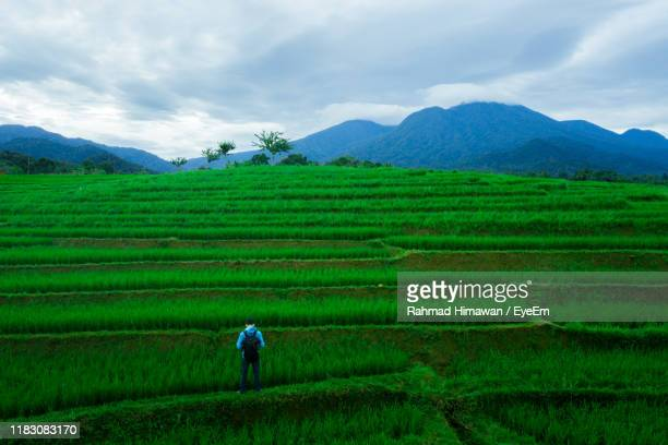 man standing on agricultural field against sky - rahmad himawan stock photos and pictures