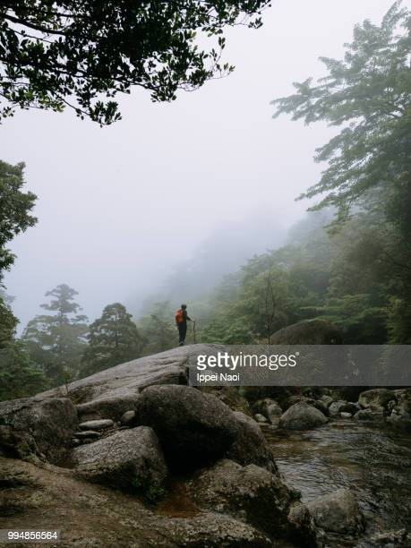 Man standing on boulder on misty mountain, Yakushima Island, Japan