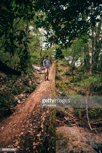 Man standing on fallen tree in forest, Fairfax, California, USA, North America