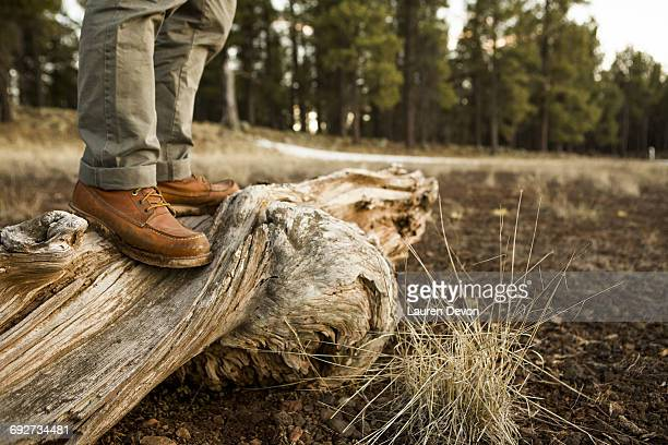 Man standing on old dead tree, low section, Flagstaff, Arizona, USA