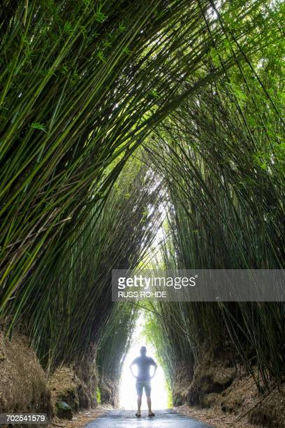 Man standing on road between arch of tall bamboo plants, Reunion Island