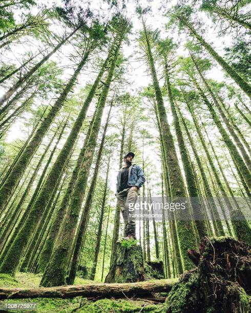 man standing on the forest in usa - tall high stock pictures, royalty-free photos & images