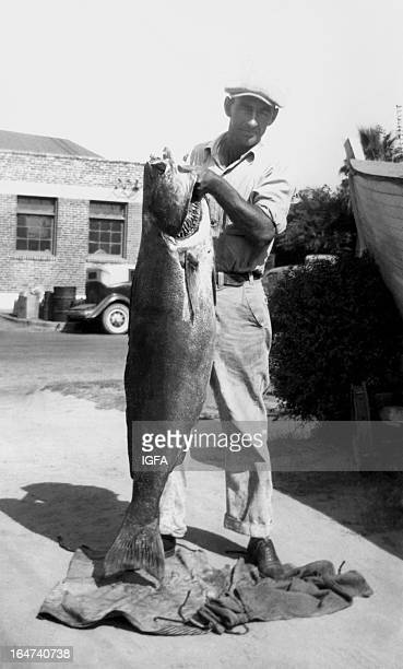 A man stands holding a 685 pound white seabass caught near the Coronado Islands in Mexico on June 13 1937 In the background is a brick building and...