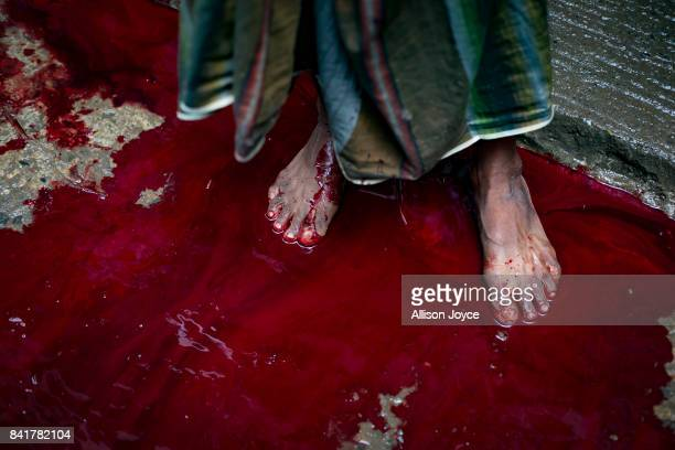A man stands in a pool of blood as a cow is slaughtered on September 2 2017 in Dhaka Bangladesh Muslims worldwide celebrate Eid AlAdha to commemorate...