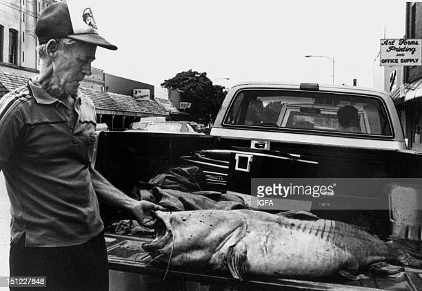 A man stands next to a 98 pound flathead catfish caught on June 2 1986 near Lewisville Texas and displayed on the back of a pickup truck