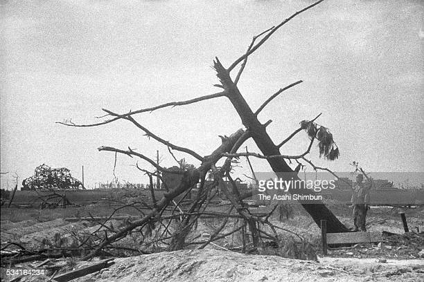 Man stands next to fallen pine tree by the atomic bomb at the Nishi Drill Field in August, 1945 in Hiroshima, Japan. The world's first atomic bomb...