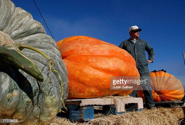 A man stands next to his giant pumpkins as he waits for them to be weighed in at the 34th Annual Safeway World Championship Pumpkin WeighOff October...