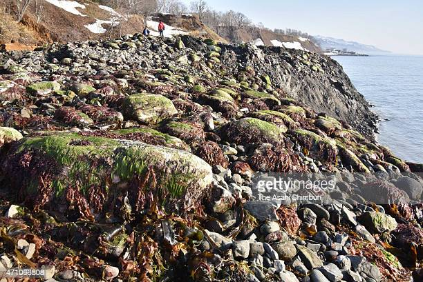 A man stands on a clump of land that emerged along the coastline of Shiretoko Peninsula on April 25 2015 in Rausu Hokkaido Japan The unexplained mass...