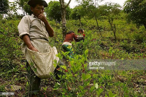 coca plant seeds canada