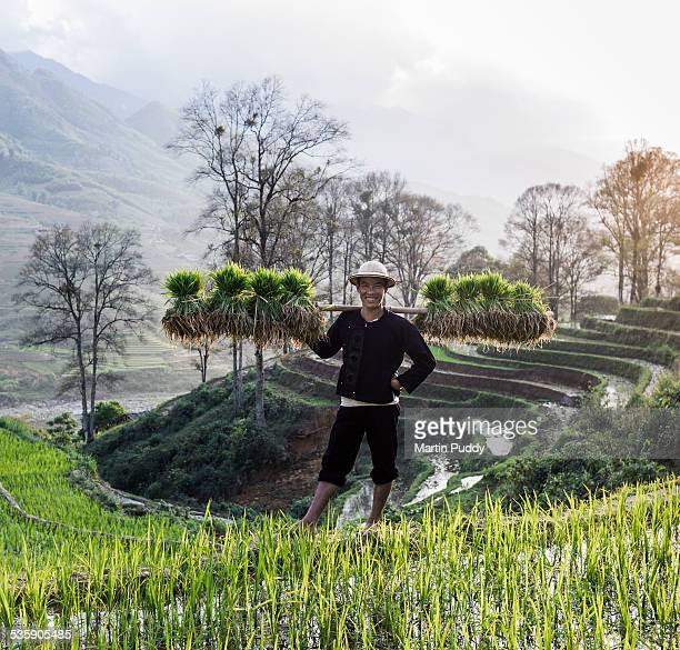 Man stanging in rice paddy carrying seedlings