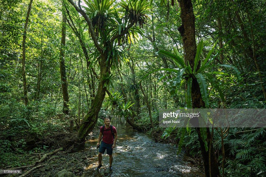 Man Stream Trekking In Lush Jungle Japan Stock Photo - Getty