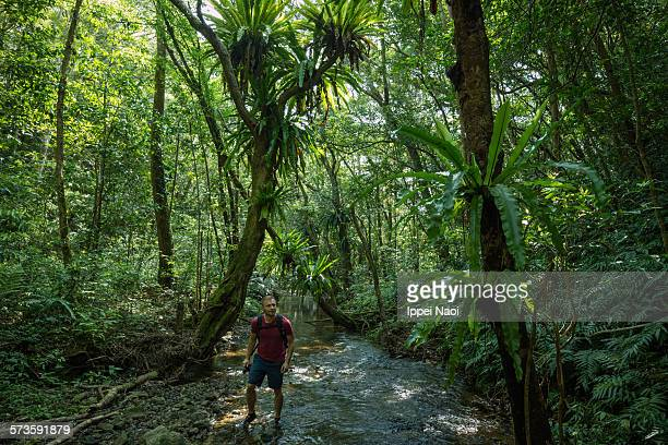 Man stream trekking in lush jungle, Japan