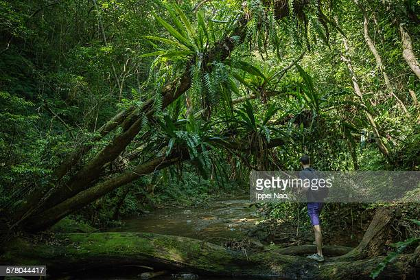 Man stream-hiking in jungle with Bird's-nest ferns