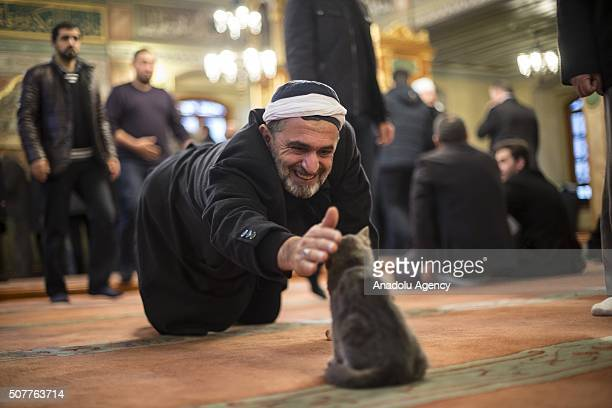 A man strokes a cat at Imam Aziz Mahmud Hudayi mosque in Istanbul Turkey on January 312016 Istanbul is well known for the stray cats which prowl its...