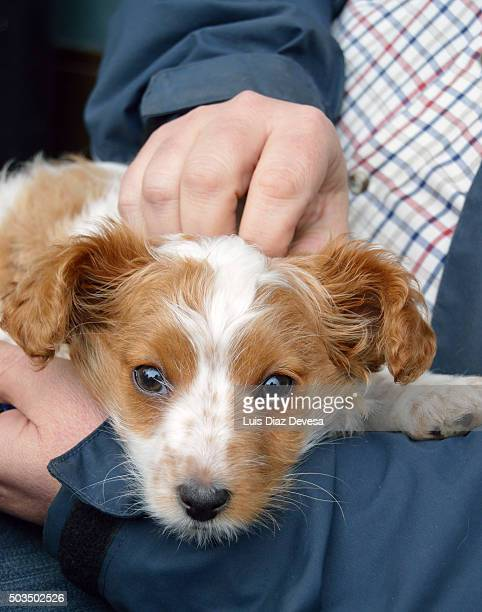 man stroking dog head - chinook dog stock photos and pictures