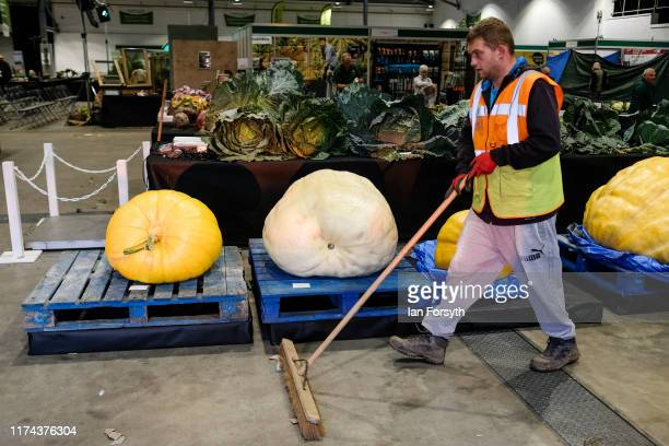 A man sweeps up around giant pumpkins before judging for the giant vegetable competition at the Harrogate Autumn Flower Show on September 13 2019 in...