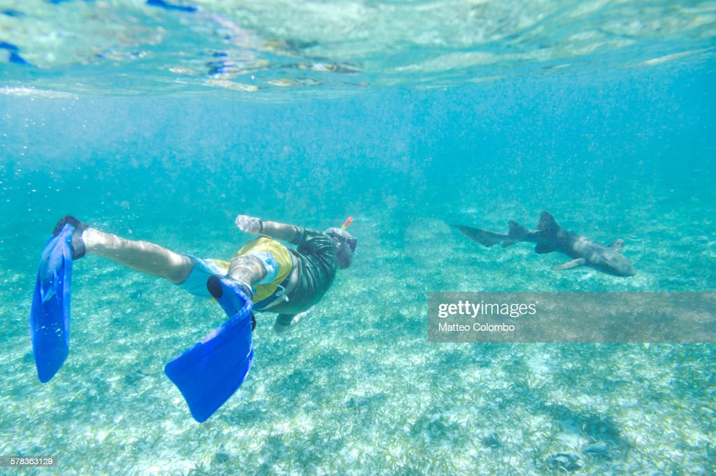 Man Swimming Underwater With A Nurse Shark Belize Stock Photo ... on