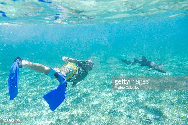 Man swimming underwater with a nurse shark, Belize