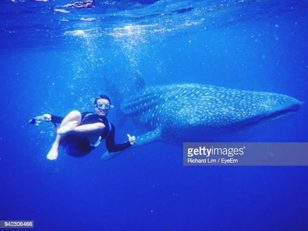 man swimming with whale shark in sea - whale shark stock pictures, royalty-free photos & images